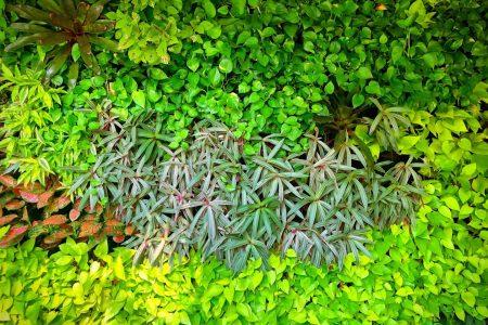 vertical-garden-wall.jpg